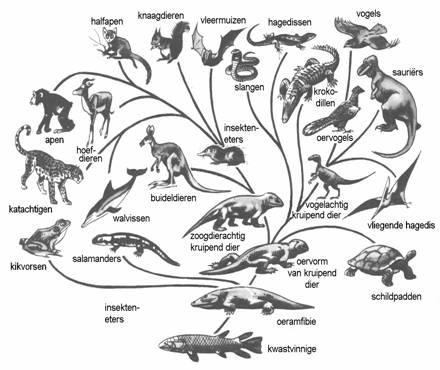 De Evolutie Theorie